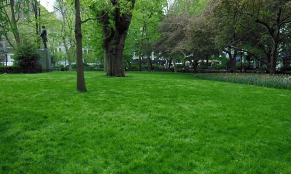 整備の行き届いた美しい芝生